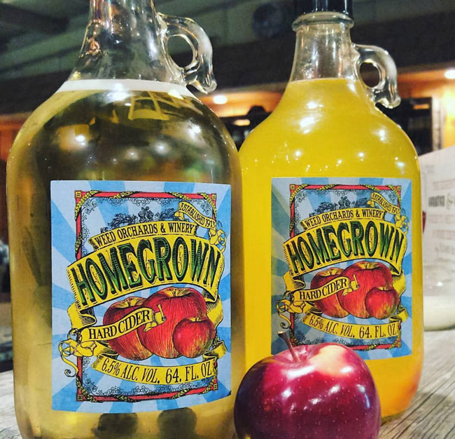 Two large glass jars of yellow toned hard cider staged on a wood bar.