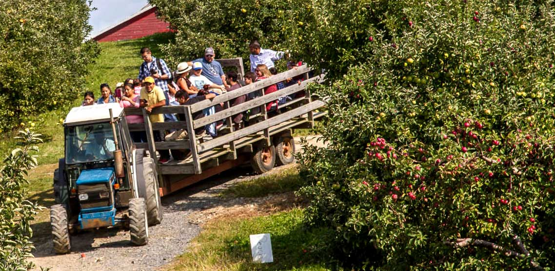 A tractor pulls a wagon filled with people through an apple orchard.