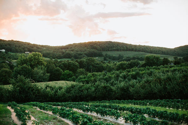 Green mountains with pink-hued skies and rows of green crops.