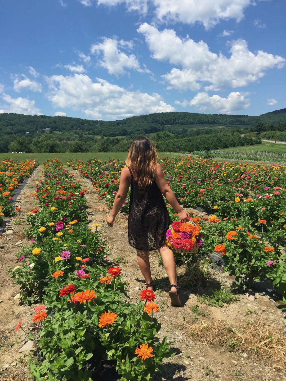A girl walking into a field of zinnia flowers