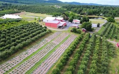 Aerial View of the Weed Orchards showing a red barn and rows of crops and apple trees.