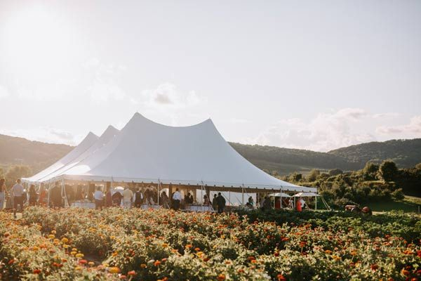 A large white reception tent surrounded by a field of zinnia flowers.