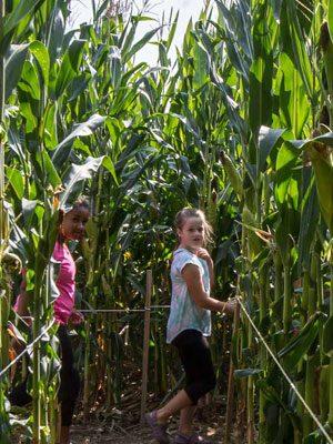 Two children wander through a corn maze.