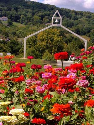 Weed's zinnia fields with a wooden arch.